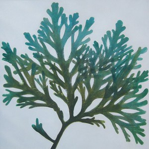 Sea Life I-Jardine, 30x30 canvas