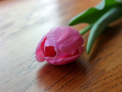 Day 27 - Flower Power