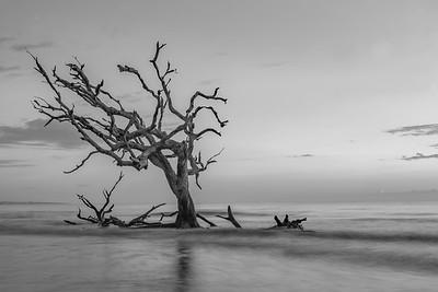 Driftwood Beach (B&W)