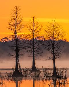 Sunrise Orlando Wetland park.