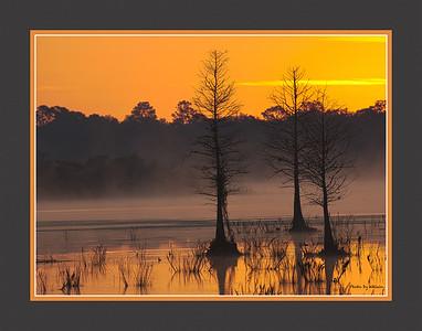 Cypress Sunrise