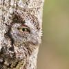 Nature's camouflage (Top 100 of the 2016 Audubon photography awards) Finalest windland smith rice international awards