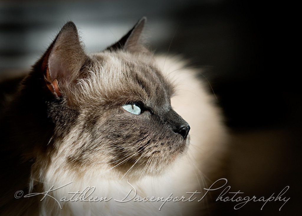 Now offering PET PORTRAITS!  Portrait services available at your home or other animal-friendly locations.