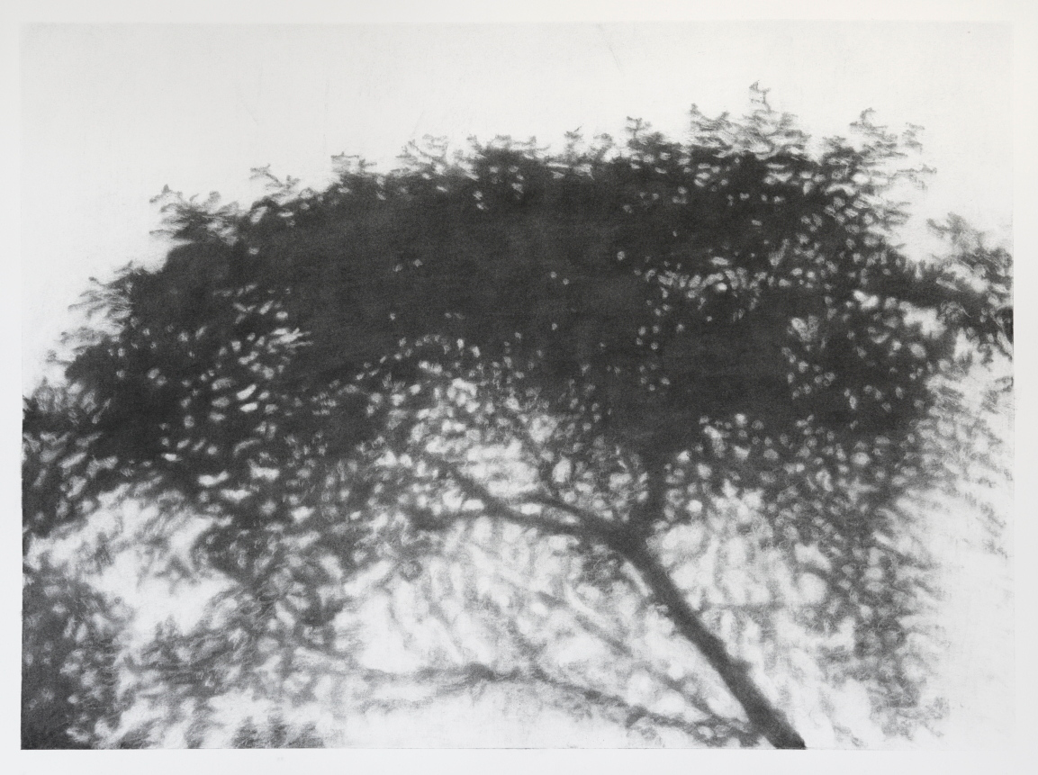 Hopkins River Shadow #1, charcoal on paper image 52 x72 cm $2,500 Framed
