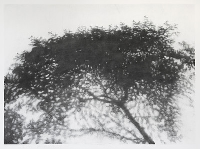 Hopkins River Shadow #1, charcoal on paper image 52 x72 cm Framed 73 x92cm