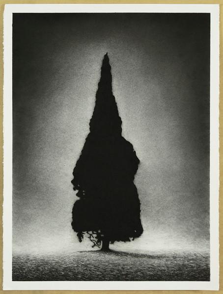 Presence, charcoal on paper, image 72 x52cm Framed 93 x72cm 2018