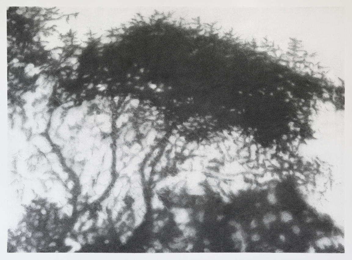 Hopkins River Shadow #2, charcoal on paper image 52 x72 cm $2,500 Framed