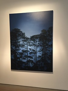 Illuminated Pines, oil on linen 183 x137cm 2017 $16,500 AUD