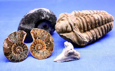 Sea Fossil Set 110