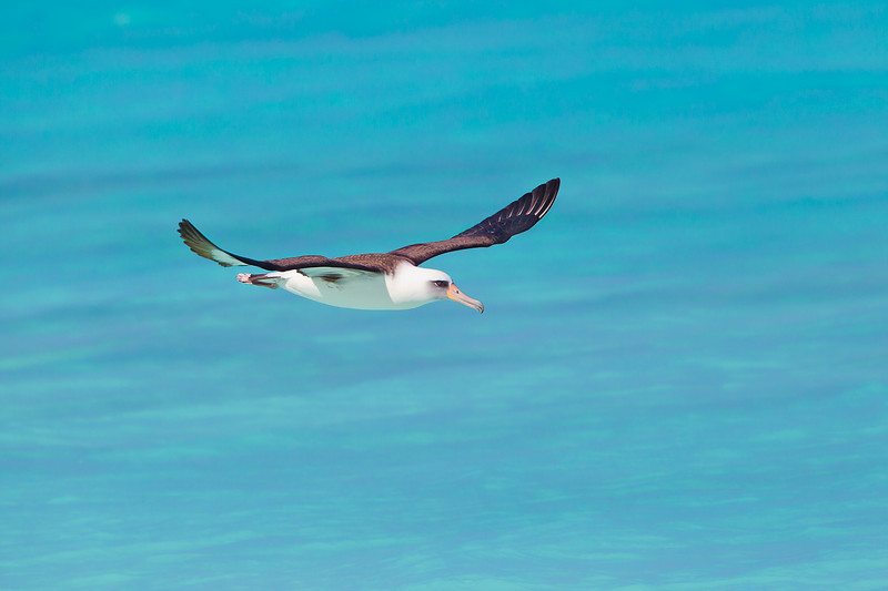 100310 Midway Atoll NWR 2768-Edit