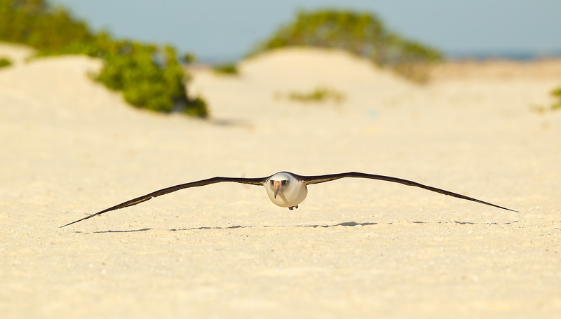 Midway Atoll NWR
