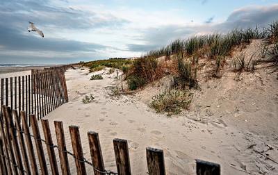Mamora Dunes