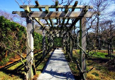Witch Hazels Garden