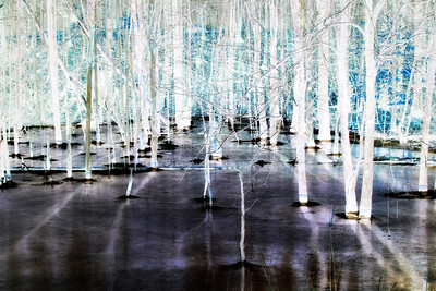 Ice Forest