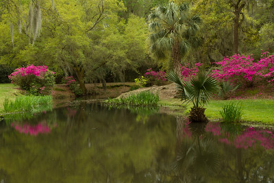 Buddha's Garden blooming in spring on Avery Island.