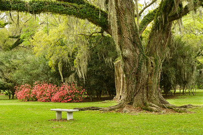 A spot to rest and enjoy the beautiful Southern Live Oaks and the blooming Azaleas.