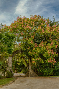 Back gate into Jungle Gardens.