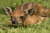 Cassie McIlhenny spotted this newborn fawn on Avery Island.