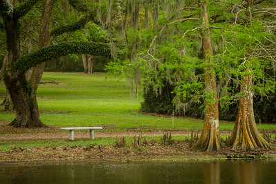 A place to rest underneath a Southern Live Oak and Cypress trees bordering a lagoon in Avery Island's Jungle Gardens.