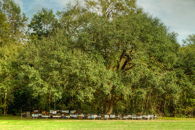 McIlhenny Farms Pure Natural Honey comes from bee hives flourishing under our Southern Live Oaks.  The hives are surrounded by an electric fence to keep the Louisiana Black Bears from raiding them.  Like Winnie the Pooh, our bears love honey.