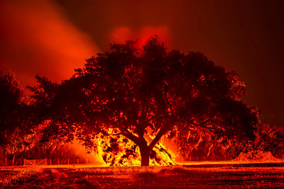 Southern Live Oak Lit up by Avery Island's traditional Halloween bonfire.