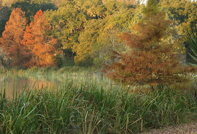 Avery Island's fall colors on display at sunrise.