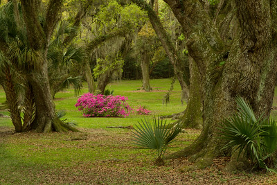 Azaleas, Palms, and Southern Live Oaks.