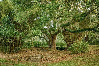 Peaceful resting place above Bird City in Avery Island's Jungle Gardens.