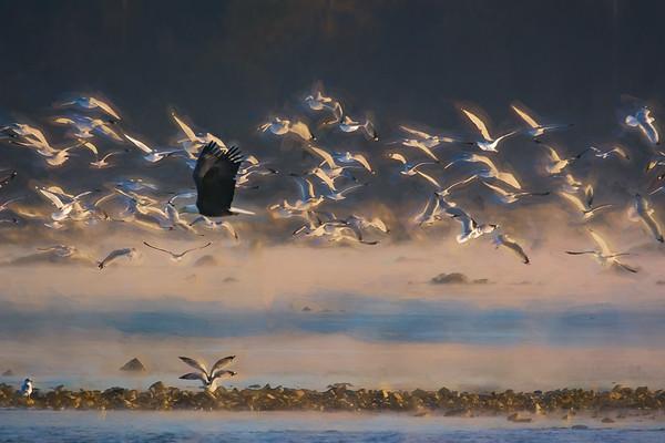 Disturbing the flock