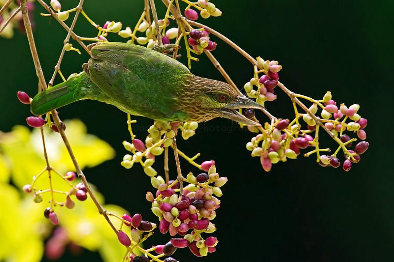 KKC  2012 (32 Species)