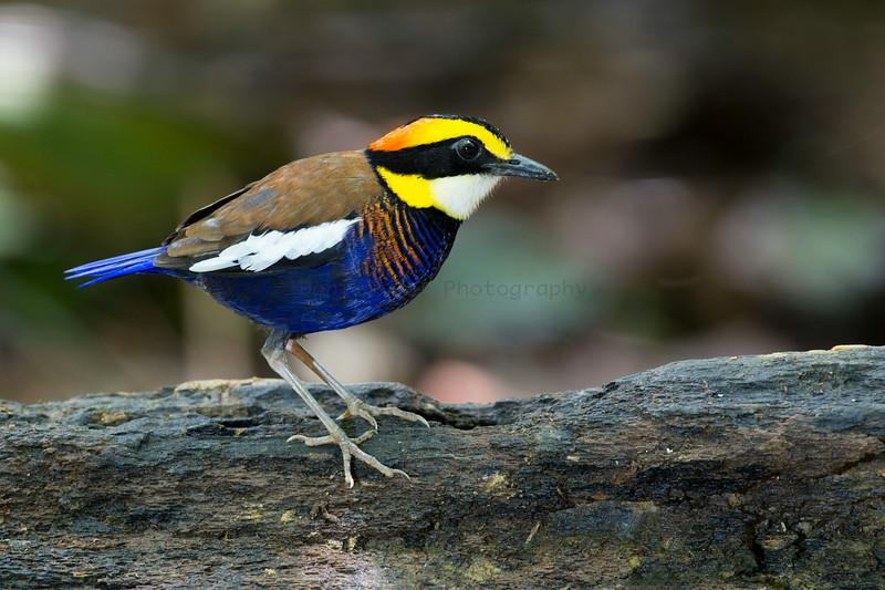 KKC/Si Phang-Nga 2014 (26 Species)