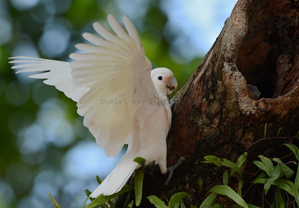 Cockatoos and Parrots (7 Species)