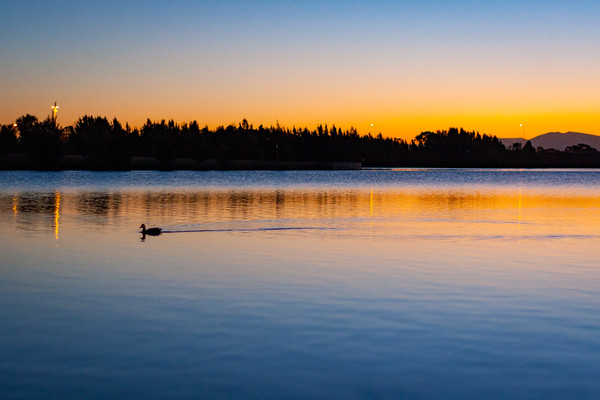 The lone duck at sunset