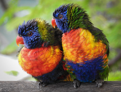 Colourful Damp Duo