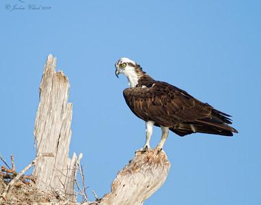 Osprey Lake Blue Cypress, Florida