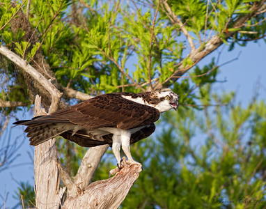 Osprey Lake Blue Cypress, Florida
