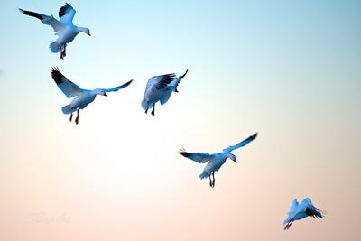 Landing Animation
