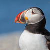 "<center><font face=""Century Gothic"" size=""+1"" color=""#FFFFFF"">Atlantic Puffin</font></center><font face=""Century Gothic"" size=""+1"" color=""#3366FF""><center><font color=""#377915"">Machias Seal Island</font></center></font>"