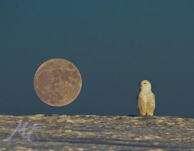 Bad Moon a risin'