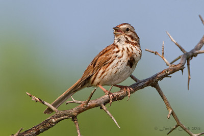 Song Sparrow Bath Nature Preserve, Ohio