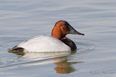 Canvasback East 72nd Cleveland, Ohio