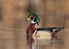 "<center><font face=""Century Gothic"" size=""+1"" color=""#FFFFFF"">Wood Duck<font face=""Century Gothic"" size=""+1""><center><font color=""#377915"">Tinkers Creek State Nature Preserve, Ohio</font></center></font></font></center>"