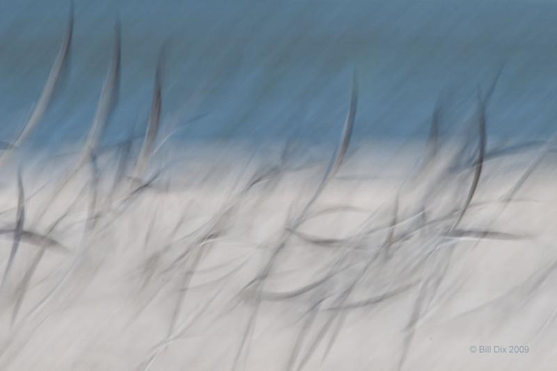 Black Skimmers in flight blur