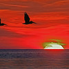 Brown Pelicans at sunset, composite