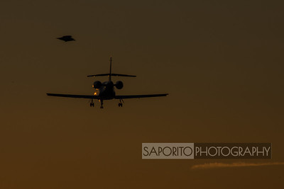 Dassault Falcon and Feathered Friend