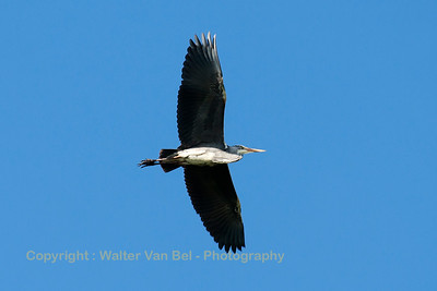 """Heron"" approaching Leeuwarden Air Base..."