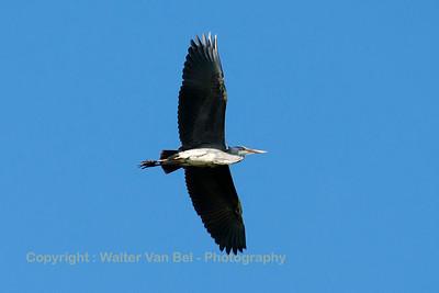 """""""Heron"""" approaching Leeuwarden Air Base..."""