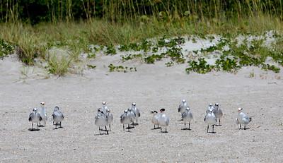 A flock of seagulls...
