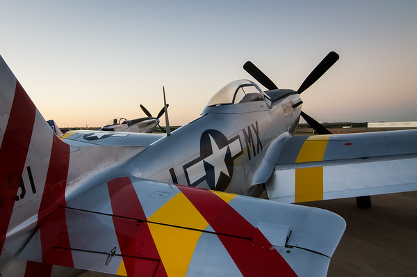 Mustangs at Sunrise