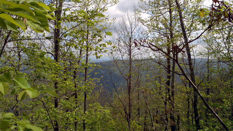 Rich Mountain is a heavily forested wilderness area.  Hiking isn't easy through here!  This view looks north, through the trees at the west end of Black Fork Mountain.